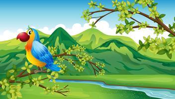 Un pappagallo vicino alla riva del fiume vettore