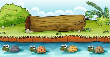 Tartarughe nel fiume vettore