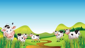 Gruppo di mucche vettore