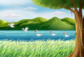 Cinque anatre nel fiume vettore