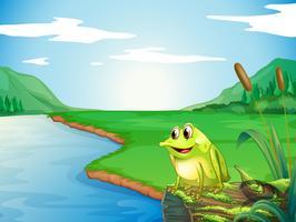 Una rana sulla riva del fiume