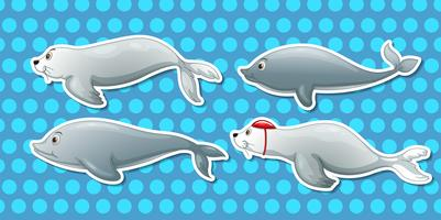 Lontra e delfino