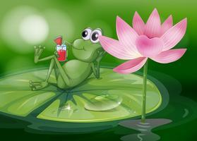 Una rana sopra la ninfea