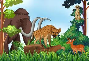 Animale e giungla vettore