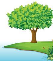 Un albero vicino al corpo dell'acqua vettore