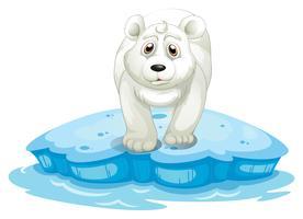 Orso polare vettore
