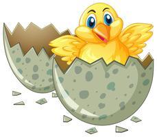 Piccolo uovo da cova pulcino