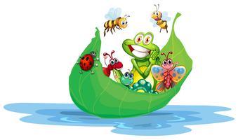 insetti vettore