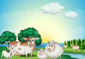 Pecore, mucche e capre vicino al fiume che scorre