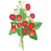 bouquet di fragole selvatiche vettore