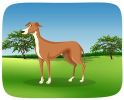 Un cane levriero sulla cornice della natura
