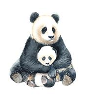 Panda acquerello e baby panda. vettore