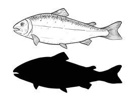 Vettore di salmone a mano di disegno