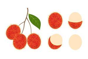 Il vettore fresco della frutta del rambutan ha isolato l'insieme su fondo bianco - Vector l'illustrazione