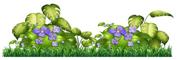 Fiore viola isolato per arredamento vettore