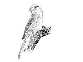 uccello vettore