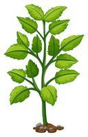 Albero verde che cresce dal sottosuolo