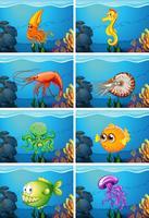 Scene con animali marini sotto il mare