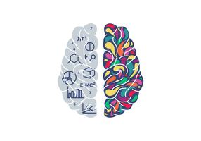 Illustrazione di vettore di cervello umano degli emisferi