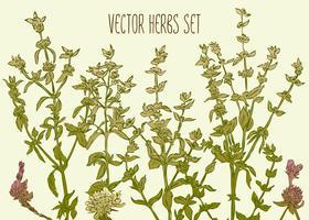 herbs_1 vettore