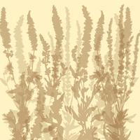 Set di erbe vettore