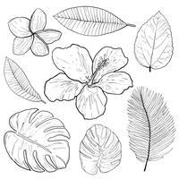 Vettore di disegno della mano di scarabocchi delle foglie e dei fiori tropicali.