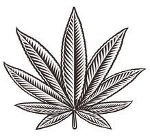 Illustrazione vettoriale di una foglia di cannabis