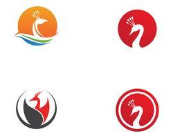 icona logo modello testa di pavone e simboli icona app
