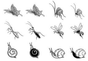 Pacchetto di vettore di insetti disegnati a mano