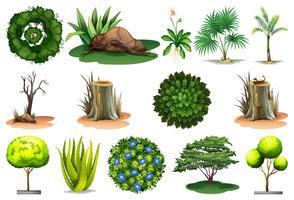 Set di diverse piante vettore