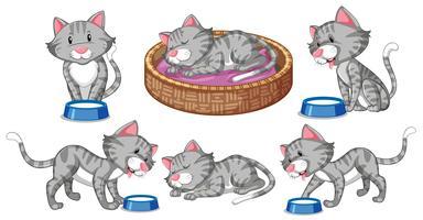 Set di caratteri di gatto vettore