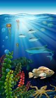 Animali marini che vivono sotto l'oceano vettore