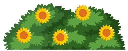 Un cespuglio di fiori isolato vettore