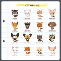 Illustrazioni canine con nomi regolari e scientifici vettore