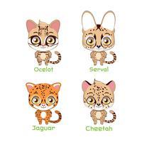 Serie di illustrazioni di specie feline maculate