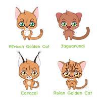 Set di specie di gatto selvatico di medie dimensioni vettore