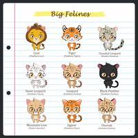 Grandi illustrazioni feline con nomi regolari e scientifici vettore