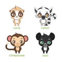 Serie di illustrazioni di primati