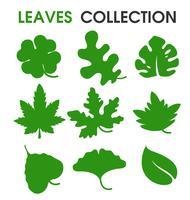 La collezione di bellissime forme di foglie e diversità naturale. vettore