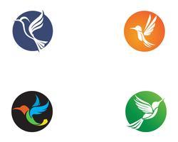 Vettore del modello di logo e di simboli dell'icona del colibrì