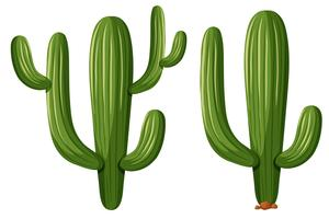 Piante di cactus in due forme