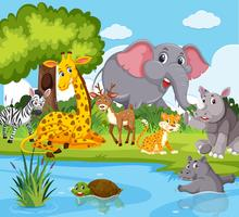 Animali selvaggi che vivono vicino al fiume vettore