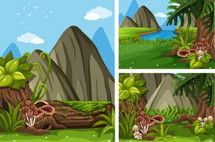Tre scene forestali con alberi e funghi vettore