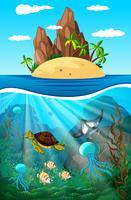 Animali marini che nuotano sott'acqua vettore