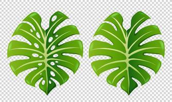 Due modelli di foglie verdi vettore
