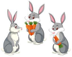 Set di tre conigli carini vettore