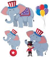 Una serie di elefanti da circo