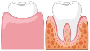 Un cartone animato di denti umani vettore