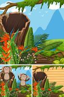 Scene con scimmie nella foresta