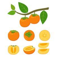 Vector l'illustrazione dell'insieme di vettore della frutta fresca del cachi isolato su fondo bianco